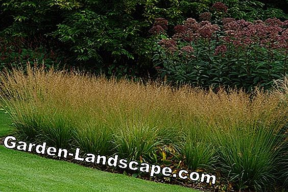 Ornamental grasses - light and elegant