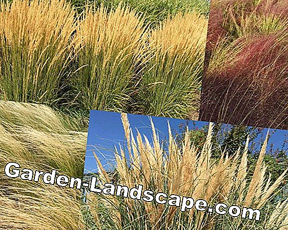 How to get your ornamental grasses through the winter