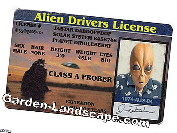 Chainsaw driver's license - when and where is he required?