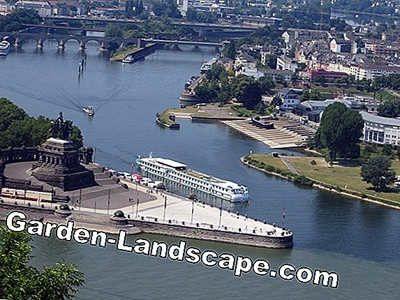 Exclusive river cruise to the Federal Garden Show Koblenz