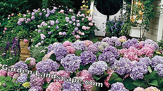 Flowering beds for every season