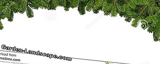 Garland of fir branches