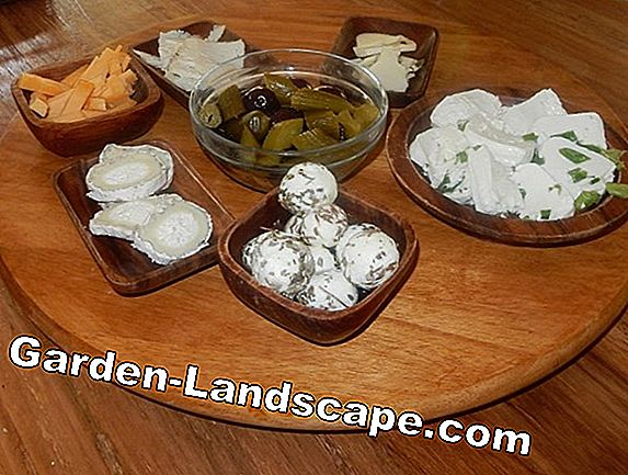 Goat cheese: An organic farm in the Black Forest