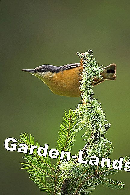 Hour of garden birds - join in!
