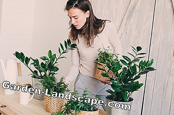 Indoor plants for allergy sufferers