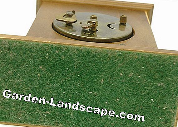Linden wood - Prices, buy, features - Wood from Linden