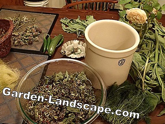 The medicinal plant school - cures for body and soul
