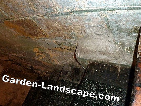 Remove mold in the stairwell & hallway and avoid