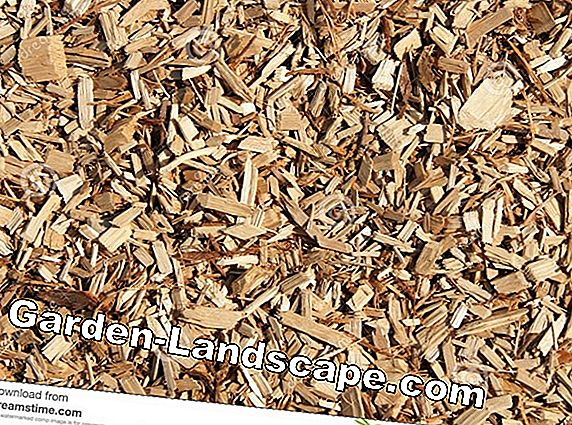 Prices for wood chips - woodchips