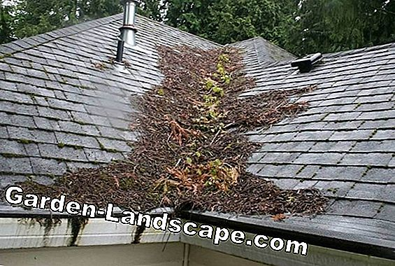 Roof cleaning of moss - how often recommended?