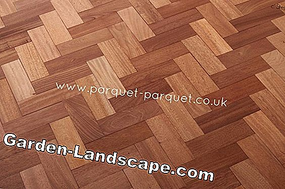 Sapele - wood, parquet, profile