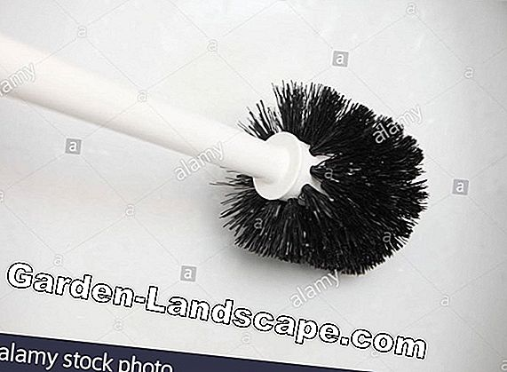Toilet brush - cleanliness & hygiene in the sanitary area
