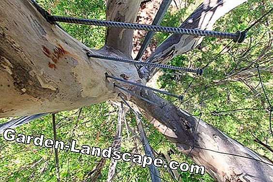 Tree-climbing iron - Tips for crampons for tree care