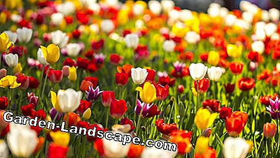 Win tickets for Floriade 2012