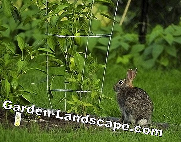 Keep rabbits and rabbits in the garden