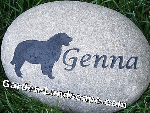 Pet burial in the garden: You must pay attention