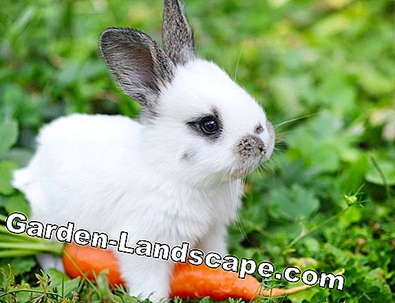 Popular rabbit names / rabbit names - male and female