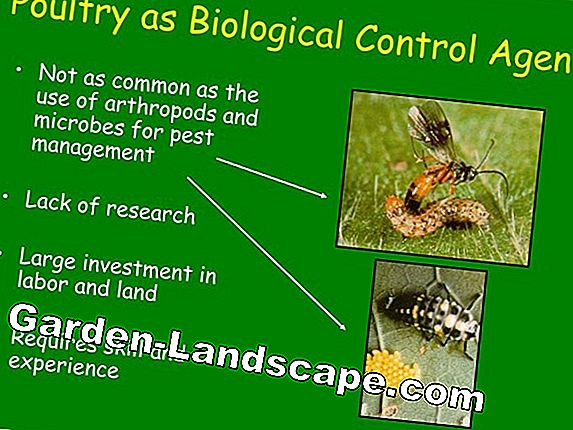 Biological Pest Control - Benefits & Examples