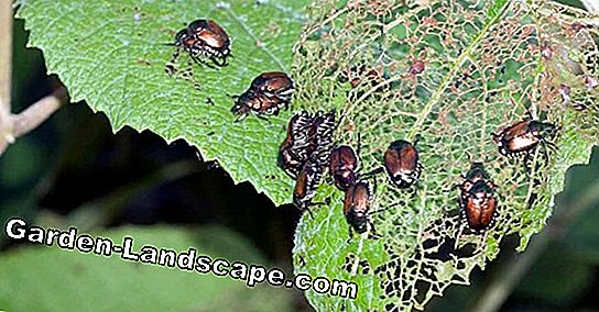 The most common diseases on plants