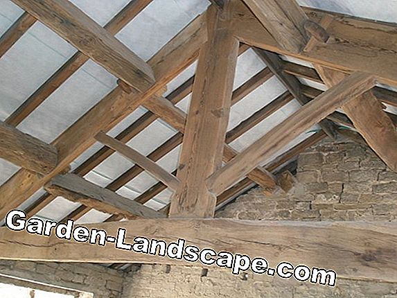 Woodworm in the roof truss - this is how you fight the pest