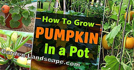 The best care tips for pumpkins
