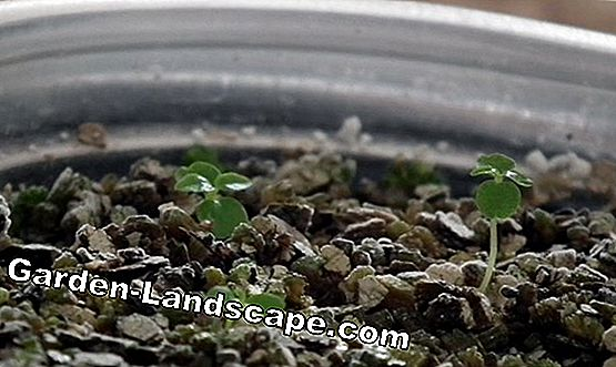 Plants Bonsai Seeds Germinate Grow Care 2020