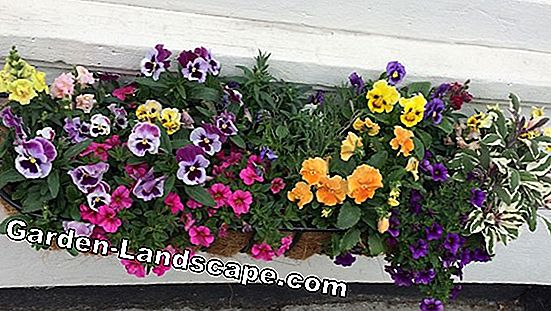 Colorful plant ideas with petunias