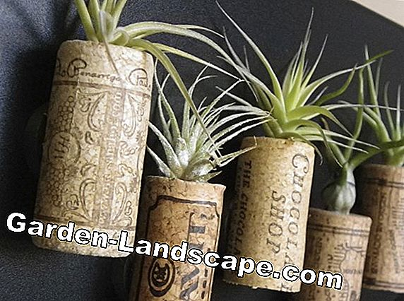 Creative Idea: Hanging Tillandsia Garden