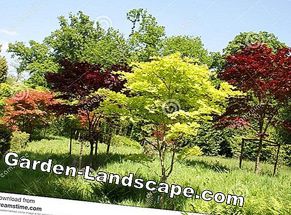 Deciduous trees in the garden