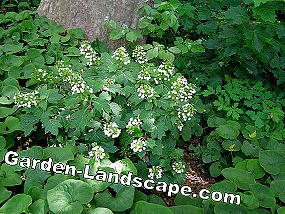 Evergreen & native woody plants for the garden