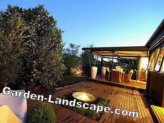 Exceptional plants in the garden and balcony