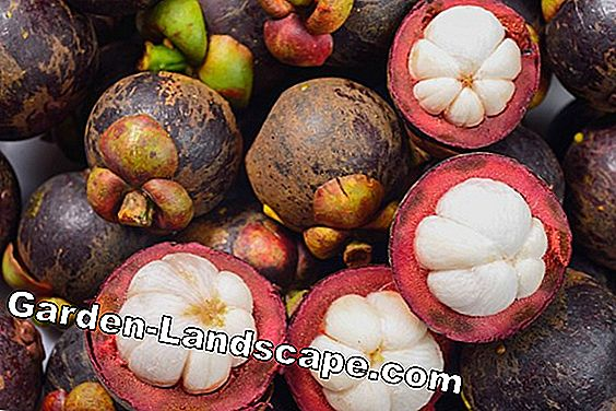 Exotic fruits - overview, cultivation, care