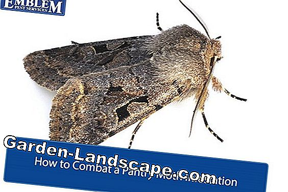 Combat fruit moths: This is how you get a grip on codling moths