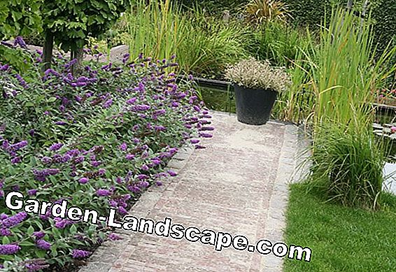Garden shrubs - red, yellow, purple and blue flowering varieties