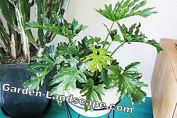 Indoor plants - care