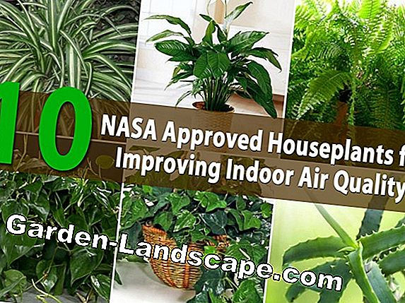 Indoor plants for good air, healthy indoor climate