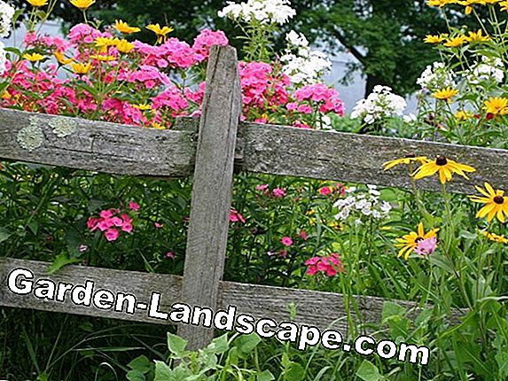 Instructions: Planting plan for a flowering perennial border