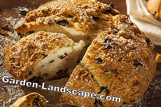 Irish soda bread with kale