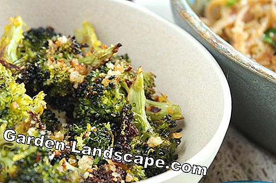 Linguine with broccoli, lemon and walnuts