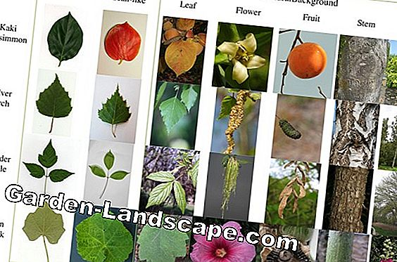 List of tree and shrub species in the garden