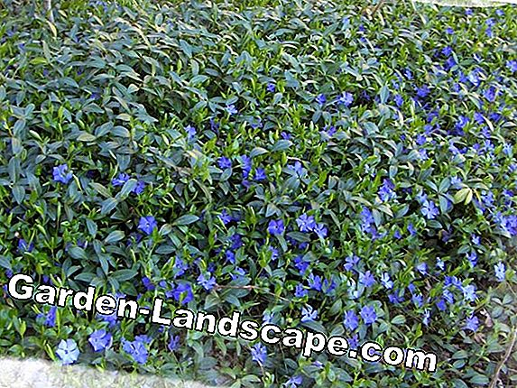 Low growing ground cover and perennials for sun and shade