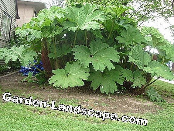 Leaf ornamental plants - plants, care