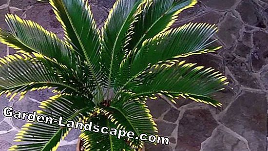 Palm trees - palm care, palm trees