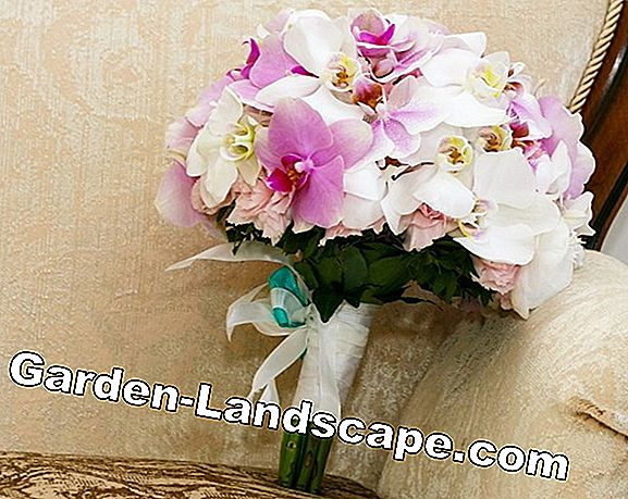 Phalaenopsis Orchid - Care Instructions + Cutting