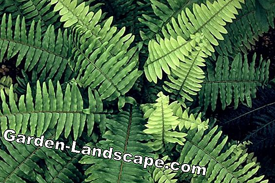 Popular exotic plants garden and indoor plants