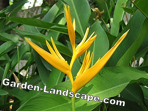 Popular exotic plants in the garden