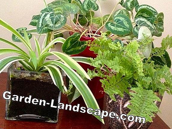 Houseplant care - the best tips for all seasons