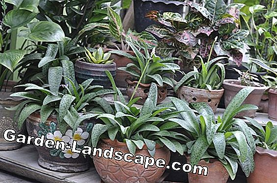 Indoor plants - care, pests, diseases
