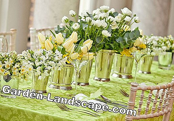 Spring decoration with primroses