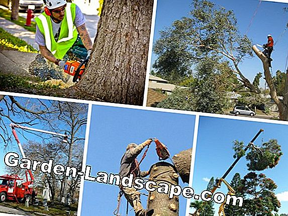Tree felling - all costs, expiration and free alternatives